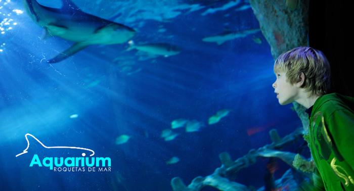 Emociom almer a pasa un d a rodead de tiburones y peces Aquarium en roquetas de mar