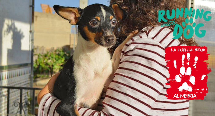 Compra un Dorsal 0 y Colabora con La Huella Roja, Anua y Almeriya en Running With Dog