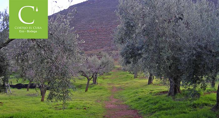 Visita la Finca e instalaciones y Cata de Vino en Bodega Cortijo El Cura por 10.20€