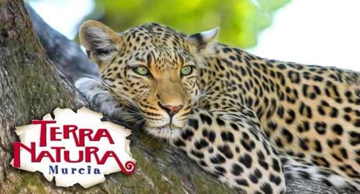 Entradas para TERRA NATURA ¡Disfruta de la belleza salvaje de naturaleza con este plan!