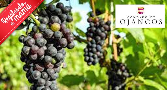 Visita bodega Condado de Ojancos + Cata de 4 vinos + Asado Argentino