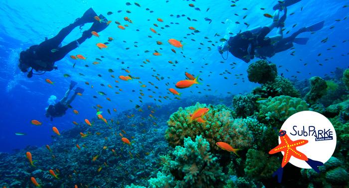 Gran aventura: Bautismo o Curso Buceo Open Water + Reportaje Fotográfico en P.N. Cabo de Gata