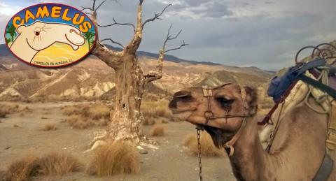 Paseo a camello, diversión en la granja y visita cultural: el origen de la capital, Bayyana