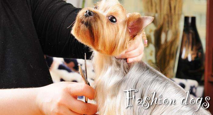 Sesión de peluquería canina: lavado antiparasitario, corte, limpieza de boca,orejas y glándulas