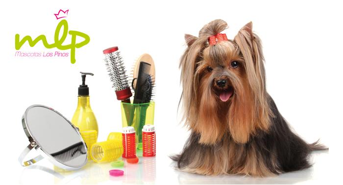 Sesión peluquería canina: baño antiparasitario, arreglo pelo, limpieza de orejas, uñas y baño