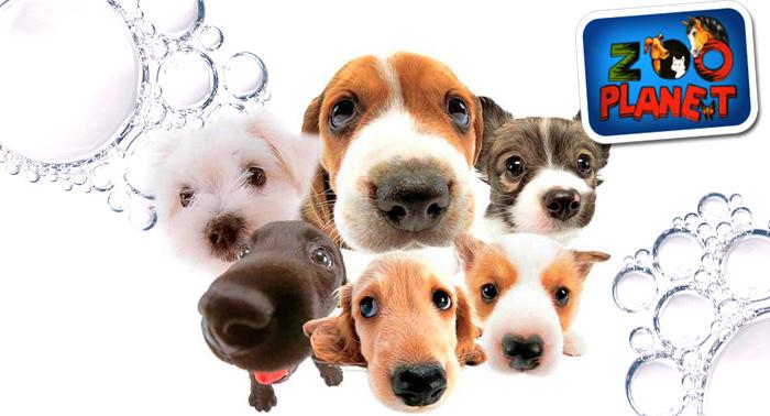 Peluquería canina: baño antiparasitario o champú, retoque de pelo, limpieza de boca, orejas
