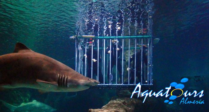 Inmersión con tiburones apta para no buceadores + Visita al Aquarium. ¡Una experiencia única!