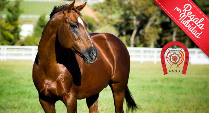 ¡¡¡Regala una experiencia única!!! Clase de Equitación en el Club Hípico de Almería