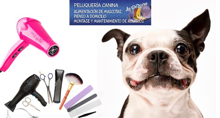 Cuidados óptimos para tu perro: baño con opción a corte, limpieza de oídos y corte de uñas