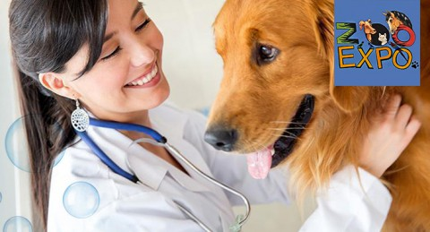 ¡Cuida y mima a tu mascota con esta completa sesión de peluquería canina!