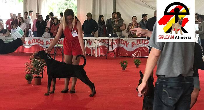 ¡Enseña a tu fiel amigo a comportarse con un Taller de Educación y Adiestramiento Canino!