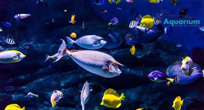 Diversión para toda la familia descubriendo el fondo marino en el Aquarium Costa de Almería