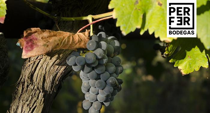 Regala para 2 personas: Visita las instalaciones de Bodegas Perfer + Cata de Vinos + Aperitivo