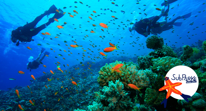 Sumérgete en la aventura: Bautismo o Curso Buceo Open Water PSS en Parque Natural Cabo de Gata