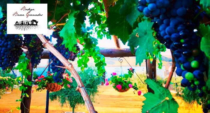¡Sorprende a tu paladar! Degustación de Vinos + Maridaje + Botella en la Bodega Barea Granados